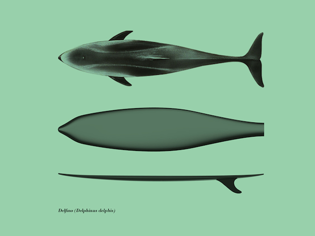 Fashions-Surfboards-by-Giulio-Iacchetti-5