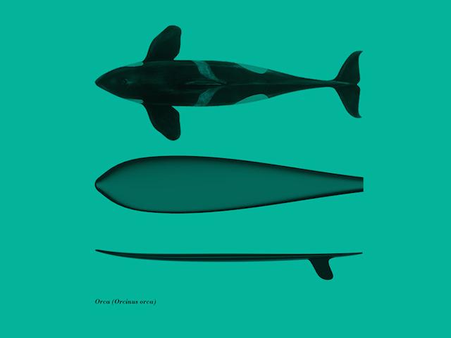 Fashions-Surfboards-by-Giulio-Iacchetti-6