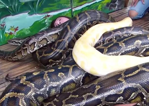 Snake-Massage-2