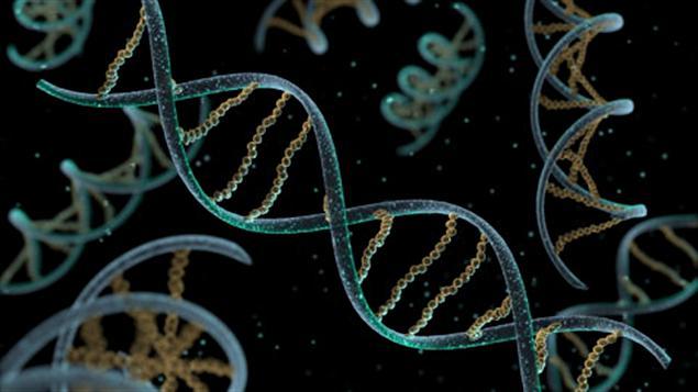 110225_g4f20_adn-cellule-helice_sn635