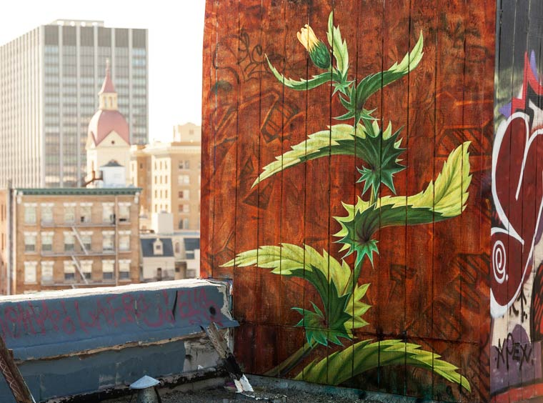 WEEDS-street-art-by-mona-caron-top
